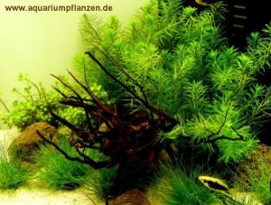 nano aquarium pflanzen set bepflanzung einfach gemacht. Black Bedroom Furniture Sets. Home Design Ideas