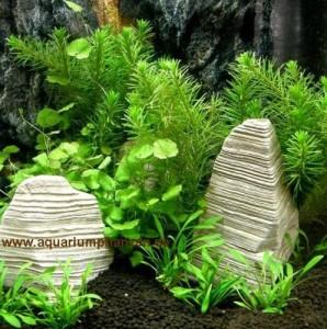 Nano Aquarium Pflanzen Set